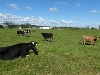Picture A Complete Dairying Package