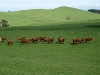 Picture South Auckland Beef and Deer Farm 341ha