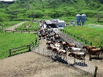 Picture Large scale, semi self contained Dairy 436...