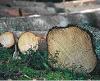 Bild Mindre obebyggd skogsfastighet