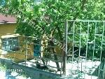 Fotoğraf Sahibinden mustakil bahceli cardakli3+1 ev
