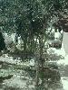 Fotoğraf Gazi̇emi̇r beyaz evlerde bahçeli̇ ev