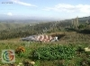 Fotoğraf 7747 - karacabey subasi köyü 58 büyük baş i̇le...