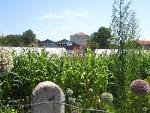 Fotoğraf Satılık Daire / Konut - Bartın Amasra Köyler