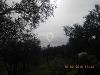 Fotoğraf Uzka yapidan 4000m2 zeyti̇nli̇k kumla...