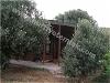 Fotoğraf Konut-meyva bahcesi +zeytin ağac havuz