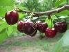 Fotoğraf Faal durumda çok ürünlü meyva sebze çi̇fli̇ği̇