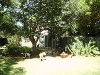 Photo Lovely garden cottage to let close to meyerton