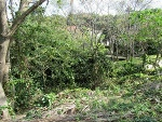 Photo Vacant land in St Winifreds