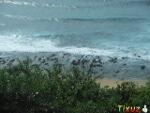 Photo Great Seaview 2 bed 2 bath 2 verSab. Bluff -...