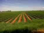 Photo Agricultural Holding for sale in Ottosdal - 4...