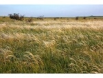 Photo R645,000 | 2Ha Vacant Land For Sale in Golf View