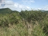 Photo Vacant Land / Plot For Sale in Ohrigstad