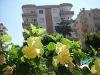 Fotoğraf Kiralık Yazlık Antalya Alanya Mahmutlar